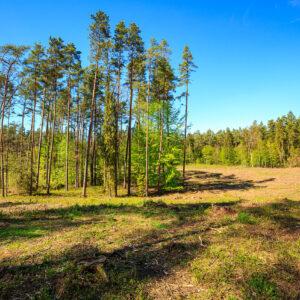 Forest Lords zdjęcie lasu 2