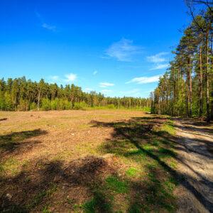 Forest Lords zdjęcie lasu 1